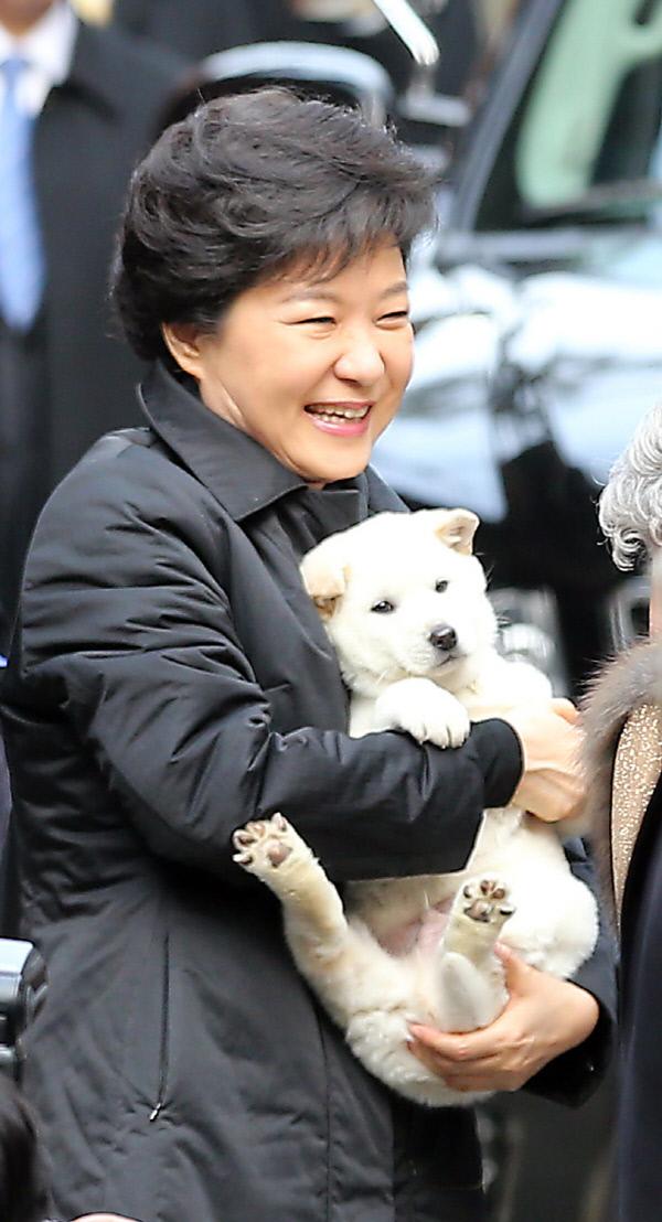 박 대통령, 선물 받은 진돗개 한 쌍 '새롬ㆍ희망이' 명명. 연합뉴스