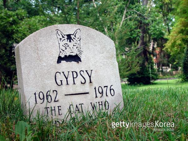 반려동물의 죽음에 대한 문화도 점차 달라지고 있다. 게티이미지/이매진스
