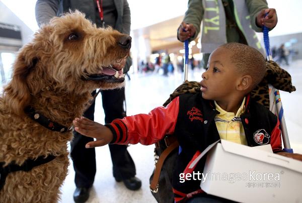 반려동물의 아이의 면역력을 높일 수 있다는 연구가 나왔다. 게티이미지/이매진스