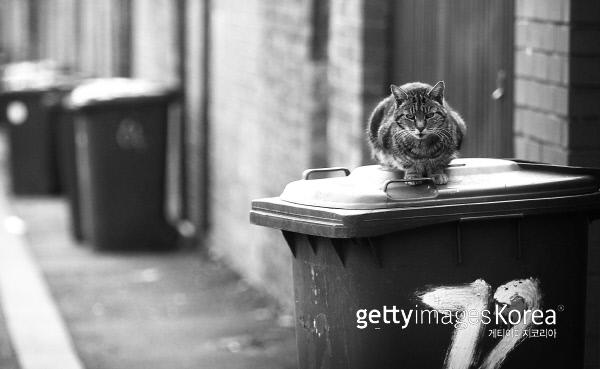 길고양이들도 행복한 삶을 살 권리가 있다. 게티이미지/이매진스
