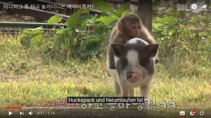 '동물농장X애니멀봐' 유튜브 영상 캡처.